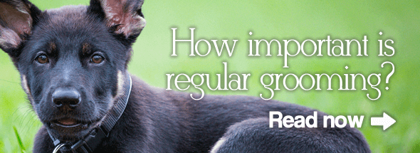 How Important is Regular Grooming?